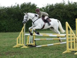Grey Show Jumping by DiveEleanorDive