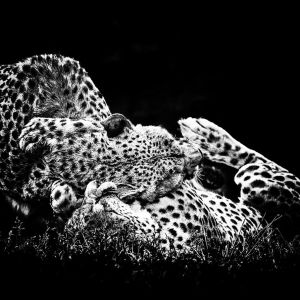 Cheetah Love by *clippercarrillo