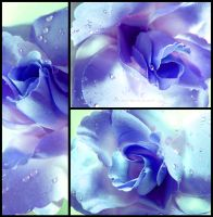 Blue Rose by Tienna