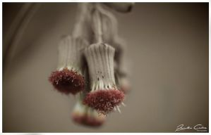 Hanging Seed by jaydoncabe