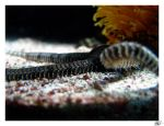 under the sea IV by new-wave-photos