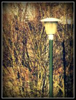 Lamppost by roxyms