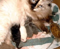 Newborn kittens by missjserenity