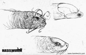 Haselwurm sketches II by dcf