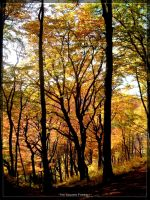 The Golden Forest I by l8