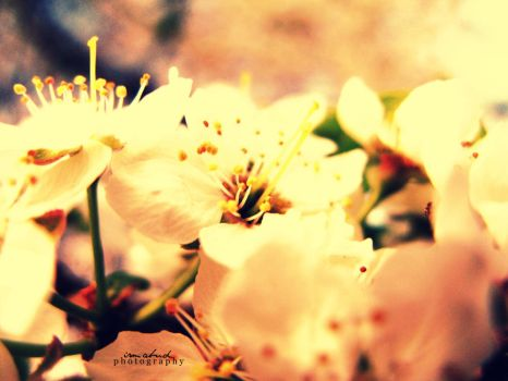 In this spring,I fell in love by summerly-sunshine