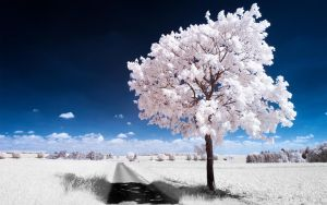 White Trees Part I by myINQI