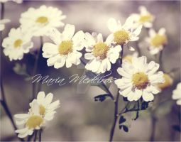 Daisy. Love by CozyComfyCouch