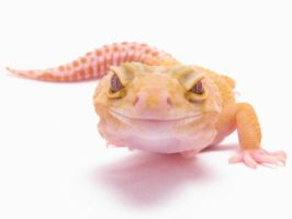 Smiling Gecko by SketchingGecko