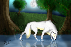 Tranquility: Wolf in the Water by Fellixe