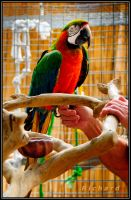 Parrot by RichardRobert