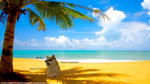Summer Doge Wallpaper by NicDroidPH