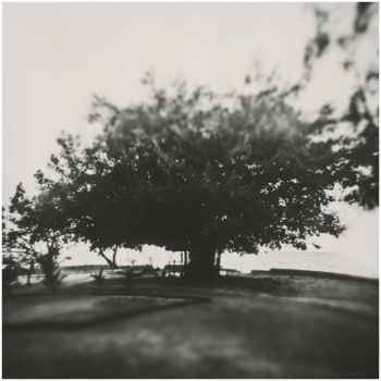 Petanque field and a big tree by Menoevil