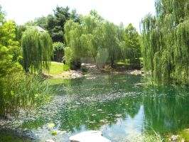 Weeping Willows by Akito-Aki