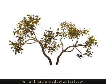 Trees by FeriAnimations