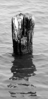Newcomb Hall Piling 2 by icreatedesigns