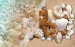shells and starfish by 1m3