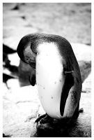 shy penguin by creativegrafix