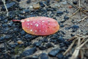 Autumn drops by PhotoLaura