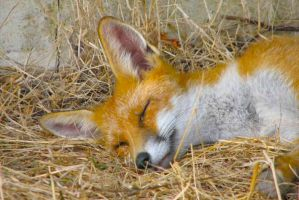 A Quick Nap by FrankWolfePhotograph