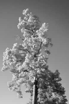 White Leaves and a bright Sky 1 by PEACEBRAKER