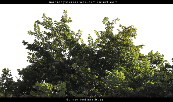 Green Foliage Cut Out by ManicHysteriaStock