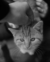 pet me by sys66