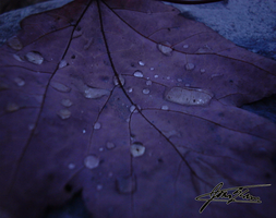 Behold the drops of nature... by GeekGod4