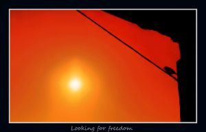 looking for freedom by seraphRo