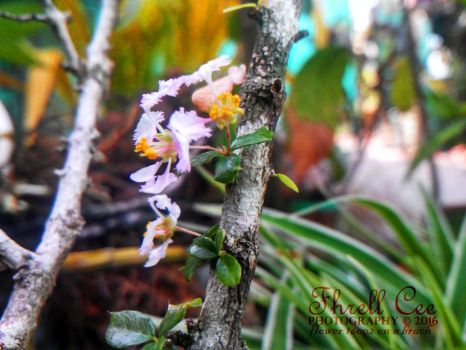 Flowers 16002 - On a Branch by avaritico