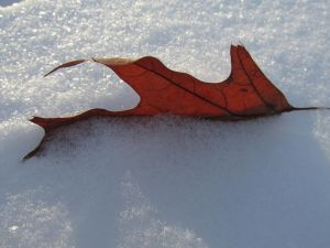 Leaf In The Snow by SamWinchester2Y5