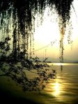 Willow Tree Dangling by TFNYaaf