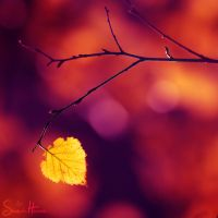.:a silent song:. by Shum23