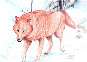 The Red Wolf by soletine