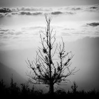 LoneTree by Hengki24