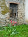 With tulips by martaraff