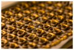 Chocolate Pretzels IV by tjackson80