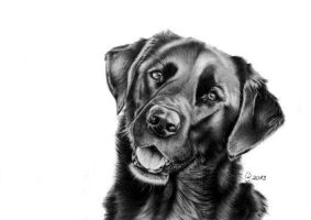 black labrador Vita by AnimalsART