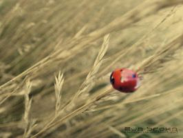 ruby beetle by LesserArcana