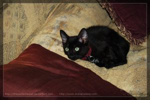 Reilly by theperfectlestat
