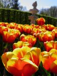 Twirling tulips by JanuaryGuest