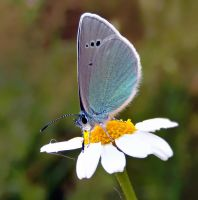turquoise by lisans
