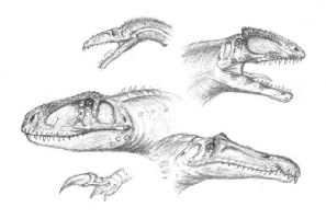South American theropods by maniraptora