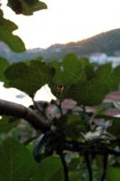 A Spider On His Web by Allystia