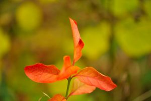 Red Autumnal Plant by pohlmannmark