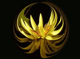 Flexified Lotus by DragonDew
