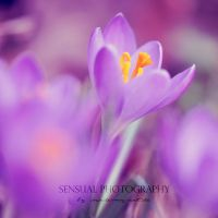 Spring is comming by Inside-my-ART