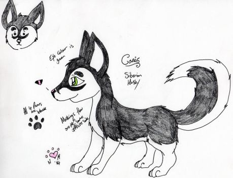 Canis Feral Reference by NiehHuskey