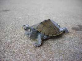 Baby Map Turtle by Kawaii--Koneko