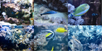 Exotic Fish pack by Comacold-stock